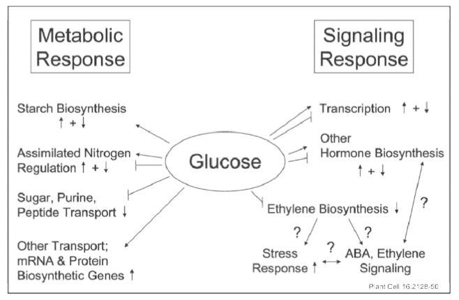 Medabolic Response